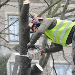 самовольная вырубка деревьев на придомовой территории