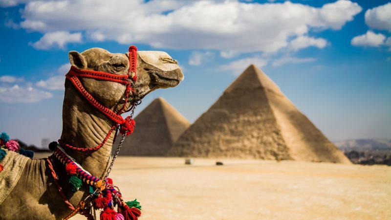 Как уехать работать в Египет: вакансии и оформление рабочей визы