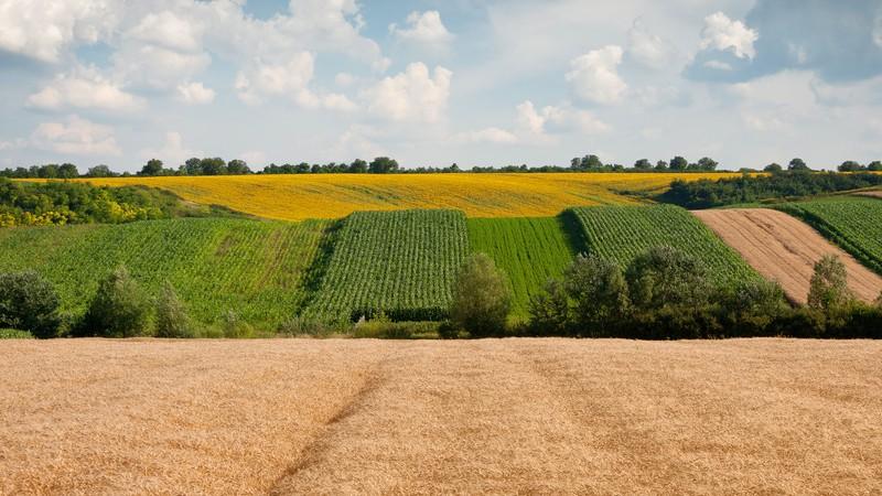 Что такое земельный пай и кто его может получить
