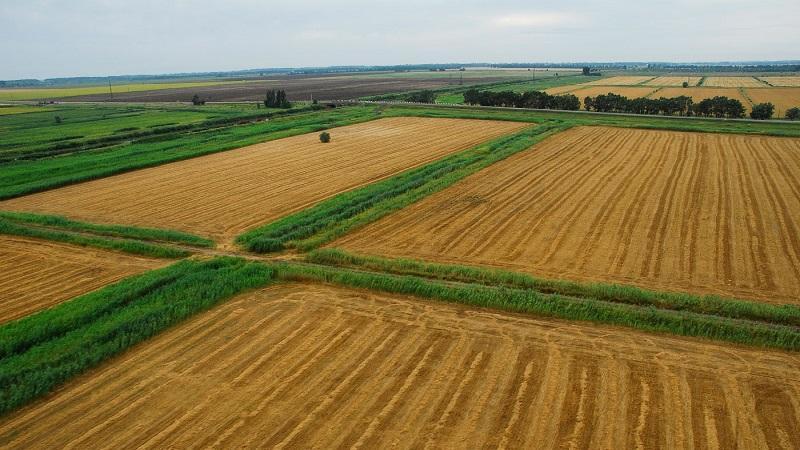 Особенности аренды земельных участков сельхозназначения